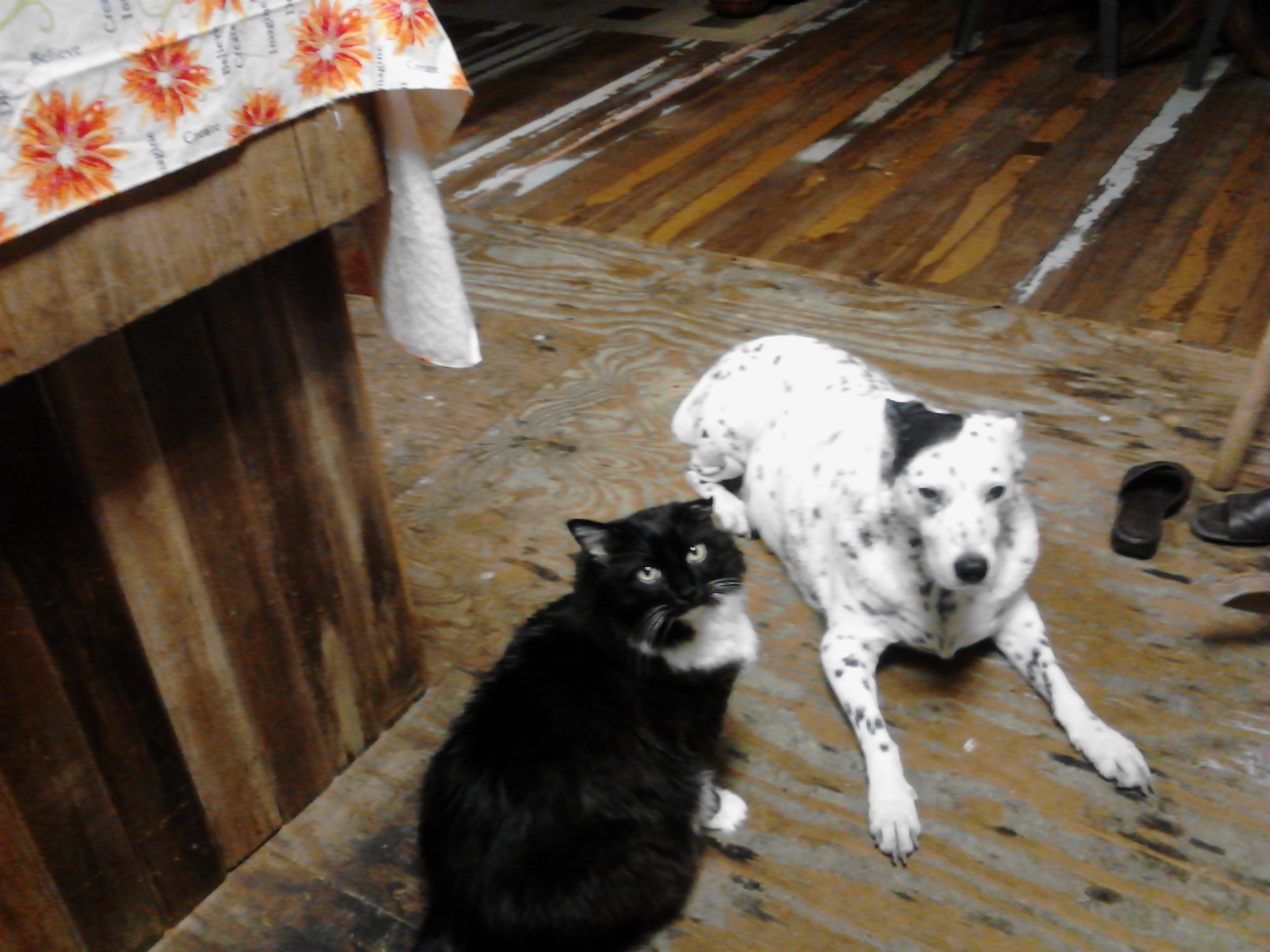 Stuie and the dog, November 2014